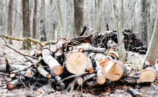 Защитники русского леса нуждаются в защите. Заявление Президиума ЦК КПРФ